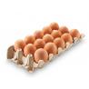 huevos blancos(maple x15)